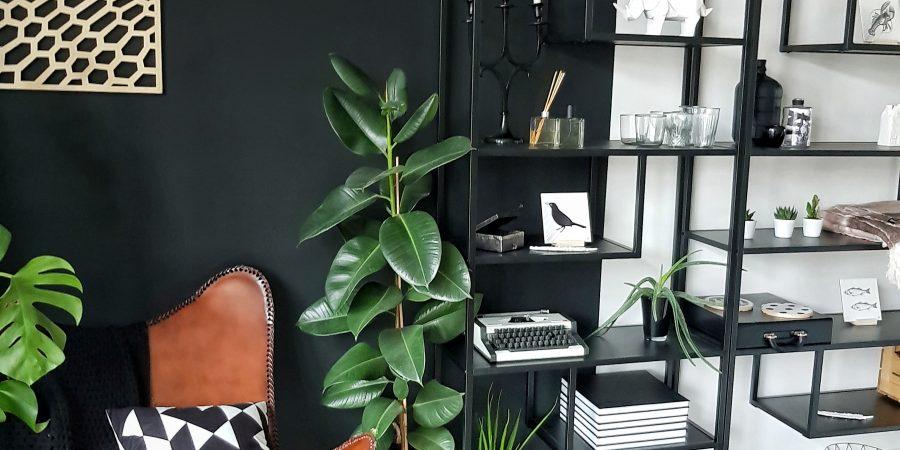 rubberplant verzorgen